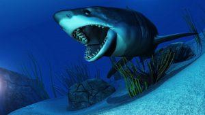 Chystáte se na dovolenou k moři? Na tyhle filmy o žralocích se před ní raději nedívejte.